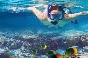 facts about hamilton island - snorkeling in hamilton island